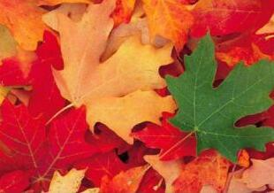 秋季敏感皮肤护理七步走