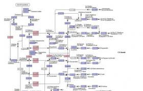 尿去甲肾上腺素(NNM)