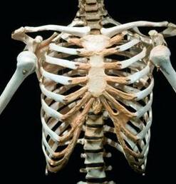 四肢的骨和关节平片