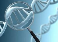 抗双链DNA抗体
