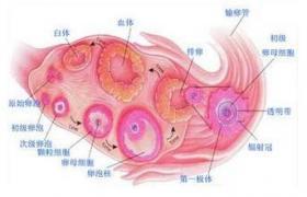 腹腔镜下单侧卵巢切除术