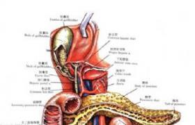 双侧肝胆管空肠吻合术